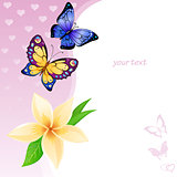 Background of colorful butterflies and flower