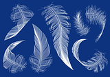 flying feathers, vector set