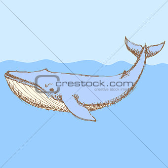 Sketch cute whalel in vintage style