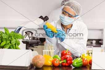 Food scientist looking at corn cob