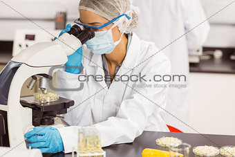 Food scientist looking at petri dish under microscope