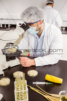 Food scientist looking at petri dish under microscope