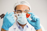 Food scientist injecting a strawberry