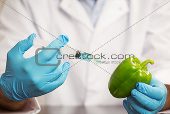 Food scientist injecting a pepper