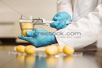 Food scientist measuring a potato