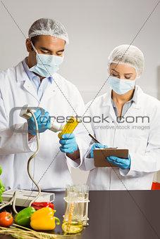 Food scientist using device on corn cob