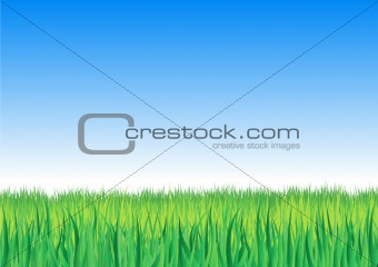 Vector illustration of detailed grass leaves on a gradient horizon sky