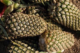 green pine apple in the foods market