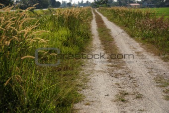 country road and paddy field in the countryside