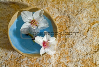 almond flowers on stone background