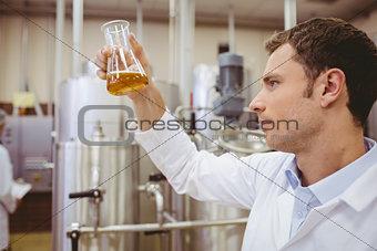 Focused scientist looking beaker with beer