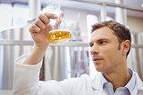 Focused scientist examining beaker with beer