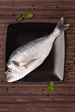 Fresh sea bream on plate, top view.