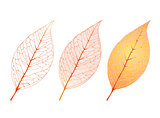 Decorative Leaf Set