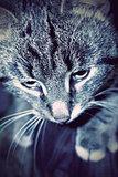 Cute Striped Cat