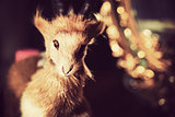 Fur Toy Ram