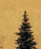 Grunge Fir Tree