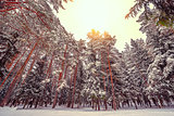 Cold winter forest.