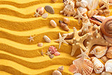 Yellow sand and seashells background.