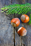 Hazelnuts isolated on a table wood