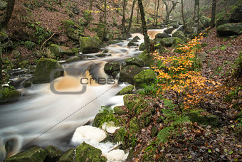 Autumn Fall forest landscape