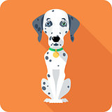 dog Dalmatian icon flat design