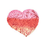 Watercolor heart with capillaries