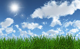 Green grass with a sunny blue sky