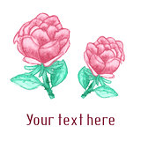 Vector watercolor background with roses