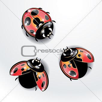 Three red ladybugs.