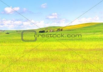 green grass field landscape under blue sky in spring