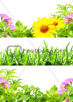Frames with summer flowers and green grass