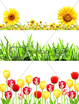 Frames with flowers and green grass
