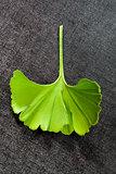 Ginkgo leaf.