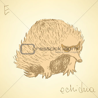 Sketch cute echidna in vintage style