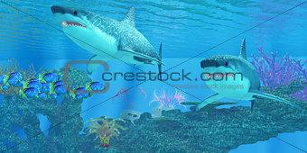 Great White Shark Shoal