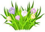 Crocus bouquet