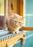 Rustic cat sitting behind a wooden house