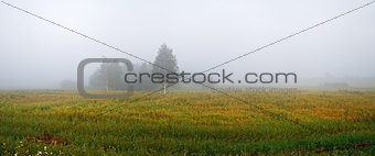 Fog in the countryside
