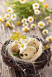 Bird-  nest.
