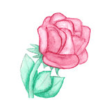 Gentle hand drawn watercolor rose