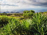 Flora of Tenerife, Canary Islands. Spain