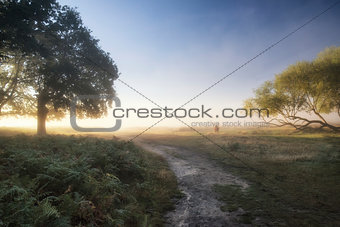 Beautiful diffused light on landscape with red deer stag