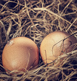Two raw eggs in the nest