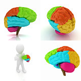 Colorfull human brain