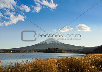 Fuji with Golden Flowers