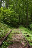 Railroad into the forest
