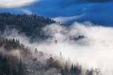 coniferous alpine forest in dense morning fog
