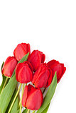 Fresh red tulips bouquet