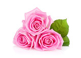 Three pink rose flowers